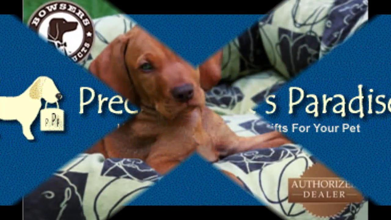 Precious Pets Paradise : Orthopedic Dog Beds