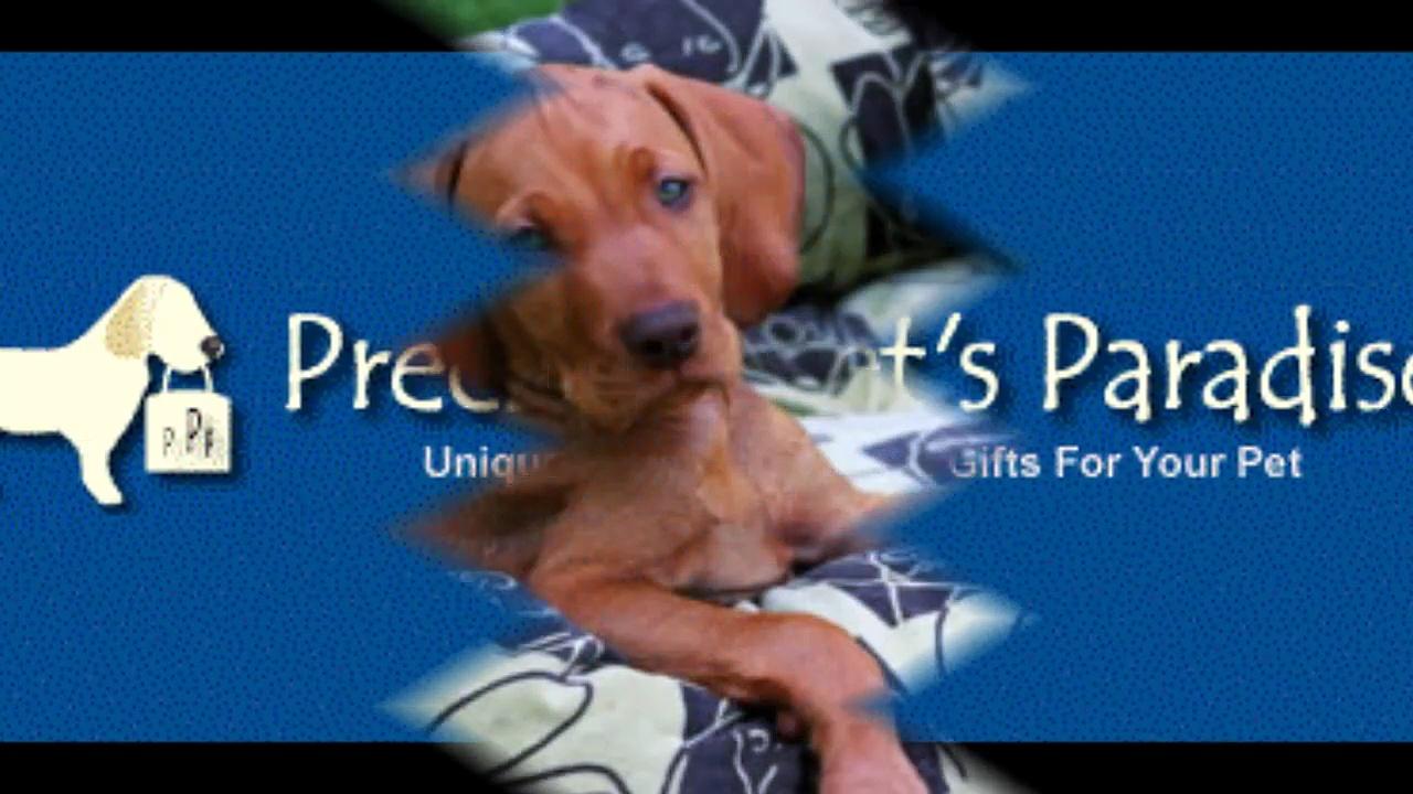 Precious Pets Paradise : Big Shrimpy Dog Beds