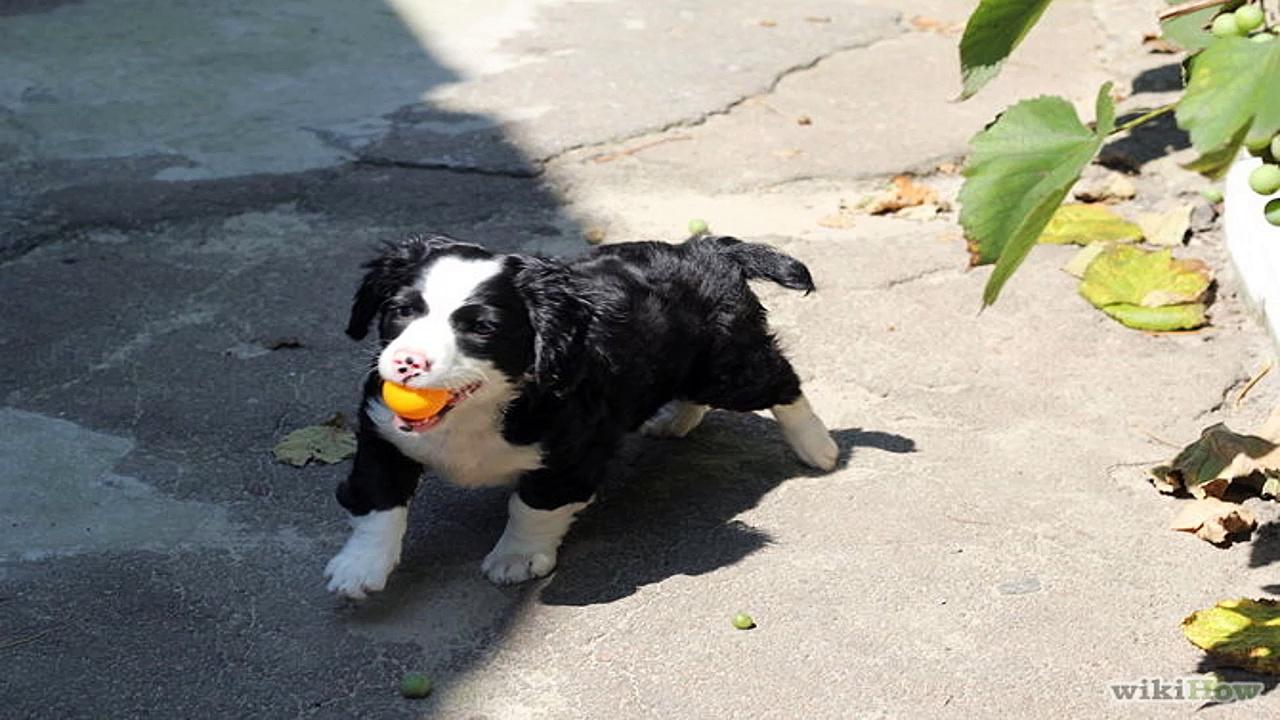 Dog Training – House Training Your Dog