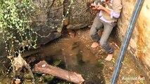 Le sauvetage d'un chiot tombé dans un puits.