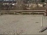 Papilys hongre trotteur français 4 ans