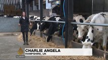 UK dairy industry turns sour amid falling prices
