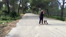 dressage canin la ciotat 13 Education canine la ciotat marche en laisse avec deux chiens