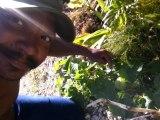 2015/02/01 16h31 Mes 1er Giromon & Melon Guadeloupe Plantés Jardin Fait Maison Yannis MALAHËL Dimanche 01 Février 2015