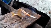 smoking funny vidoes
