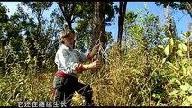 0029-第29集再造热带雨林(下)