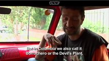 What is Devils Breath (Scopolamine) The most dangerous drug in the world- 'Devil's Breath' chemical from Colombia can block free will, wipe memory and even kill