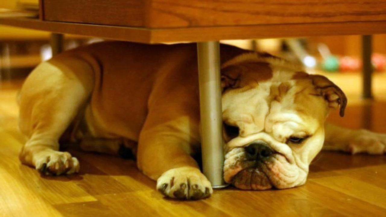 Dog training – Training your dog the right way