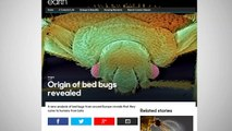 Bed Bugs Could Have Originated From Bat Caves