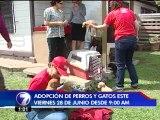 35 perros esperan por un hogar en la Feria de Adopciones el próximo viernes