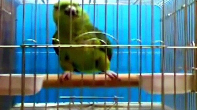 Parrot Reciting Quran Majeed - Subhan Allah Free Video Download Dailymotion