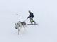 Dog snowboarding