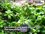 Tours : excursion exotique sous les serres du Jardin Botanique