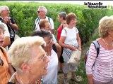 Vignes, vins et randos à Cravant-les-Coteaux