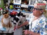 Claudette et ses 30 chats pris en grippe par ses voisins