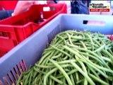 VIDEO Châtellerault: des paniers de légumes du producteur au consommateur
