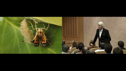 Kelebeğin Müthiş Öyküsü Ve Sen