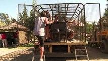 Un zoo chilien inverse les rôles et met les visiteurs en cage