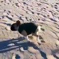 dog funny vidoes