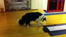 Videos que dan risa los perros mas graciosos de internet   perros que dan risa   Especial animales