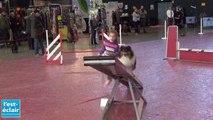 Agility : les chiens font du sport !