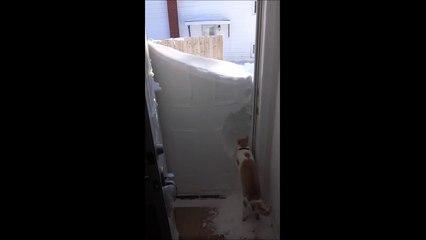 Un chat gratte la neige pour sortir