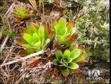 Descubren una nueva especie de anfibio en la Cordillera del Cóndor