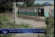 Daño en muro de Samborondón afecta cultivos