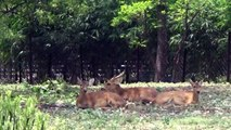 Deer & Bear in Nehru Zoological Park