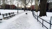 Il se moque de son chien qui tombe sur la glace et va tomber à son tour! Mauvais Karma...