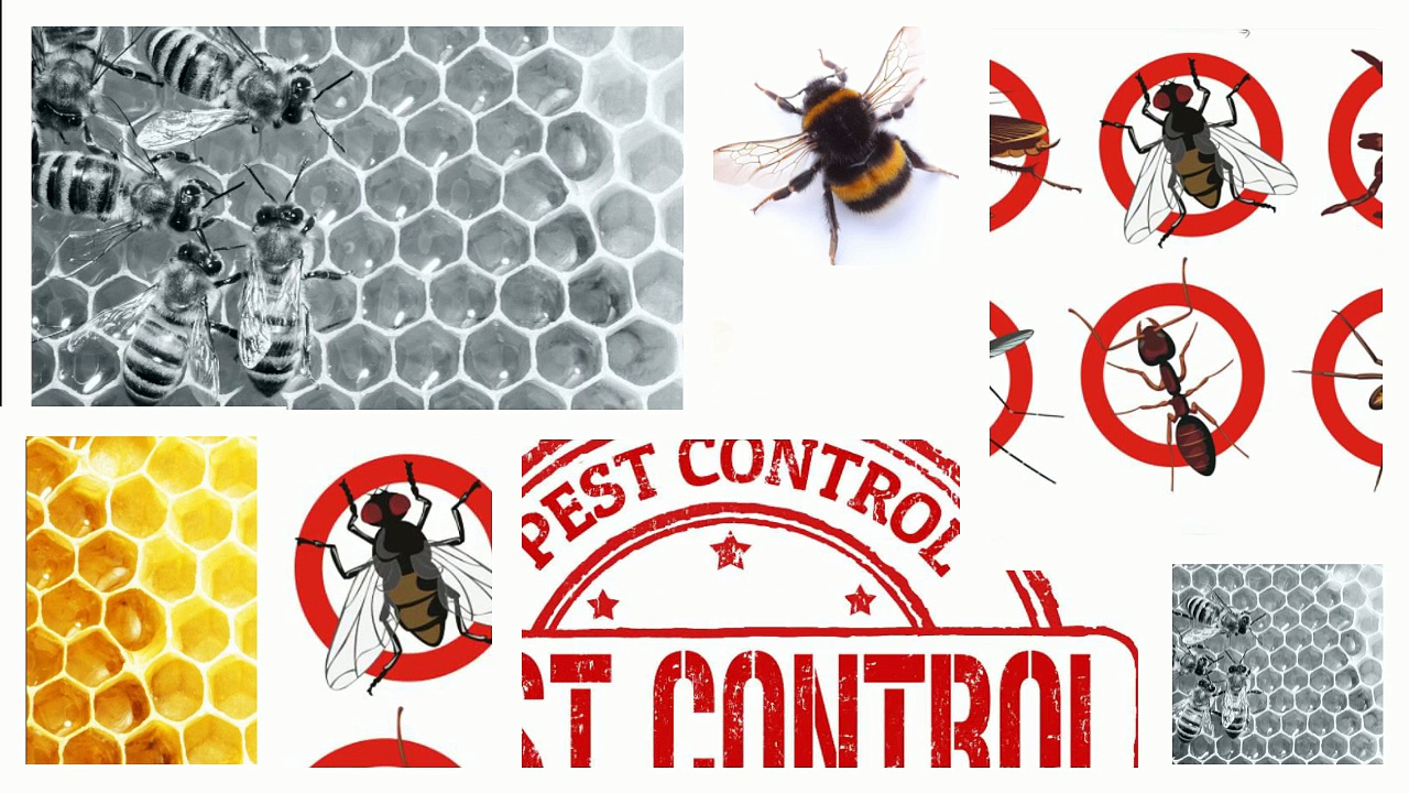 How To Avoid Insect And Bee Stings
