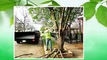 Dallas Tree Services ,  214-556-5079 ,  Dallas Tree Removal ,  Dallas Tree Trimming ,  DFW Tree Removal