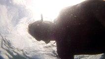 Natureza, Selvagem, Marinha, Ilhas Oceânicas, 20 milhas náuticas, Marcelo Ambrogi, Apneia, Ubatuba, SP, Brasil, Litoral Norte de São Paulo, Lindos peixes oceânicos, Corais, Ouriços do mar, Estrela do Mar, Esponjas marinhas, (49)