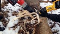 Des garde-chasses sauvent un cerf grâce à un coup de Taser