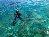 Plongée sous-marine en Polynésie française, féerie de bleus