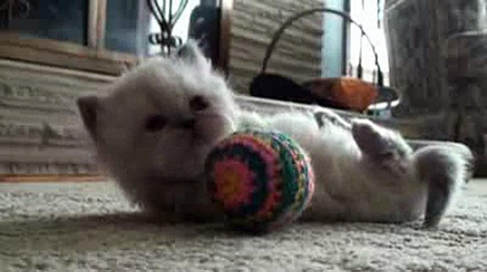 So Cute So Cute | Funny Videos
