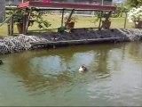 la mare aux canards