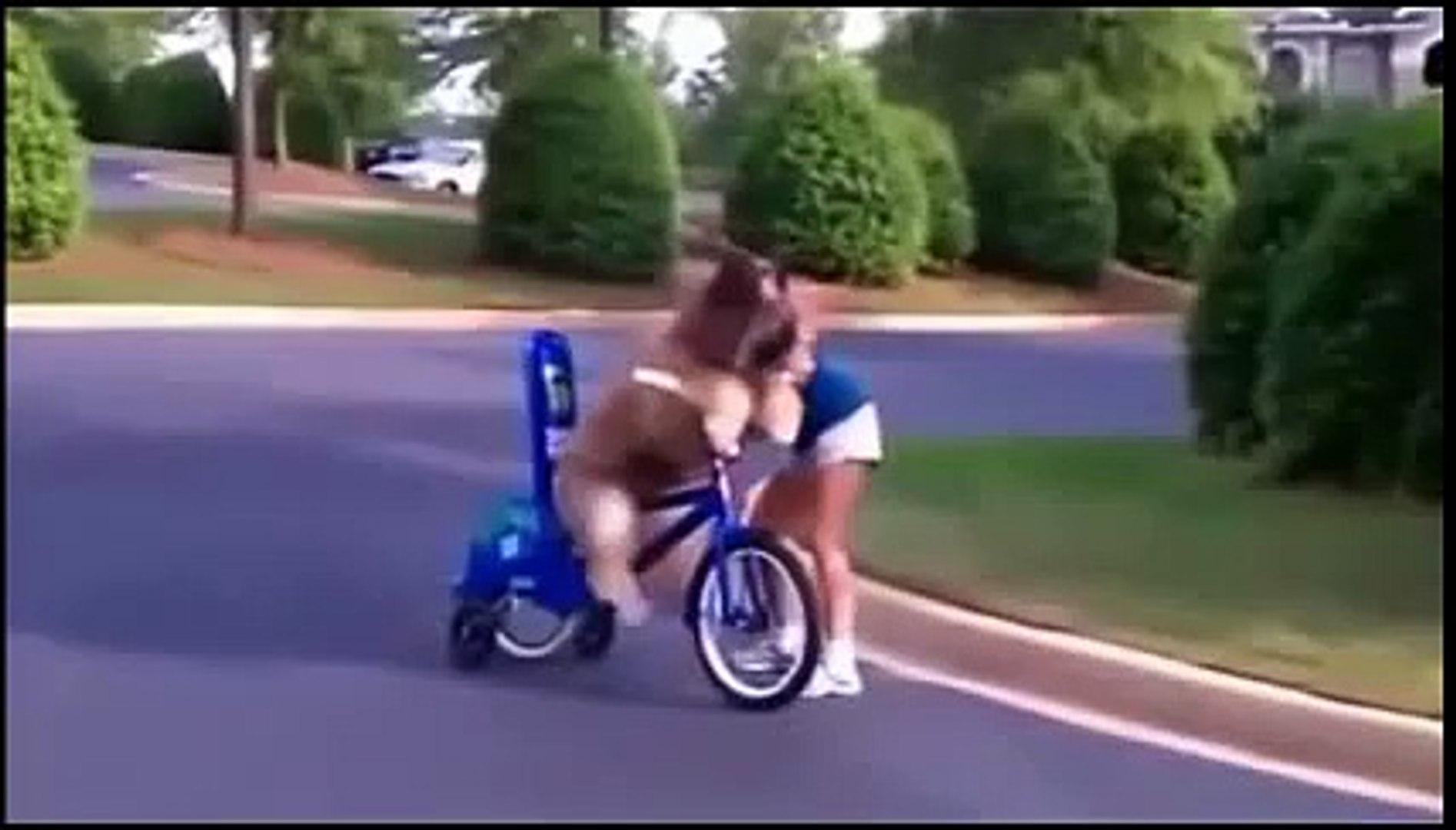 Actions of funny animals 2 ( Những hành động ngộ nghĩnh của động vật_P12)
