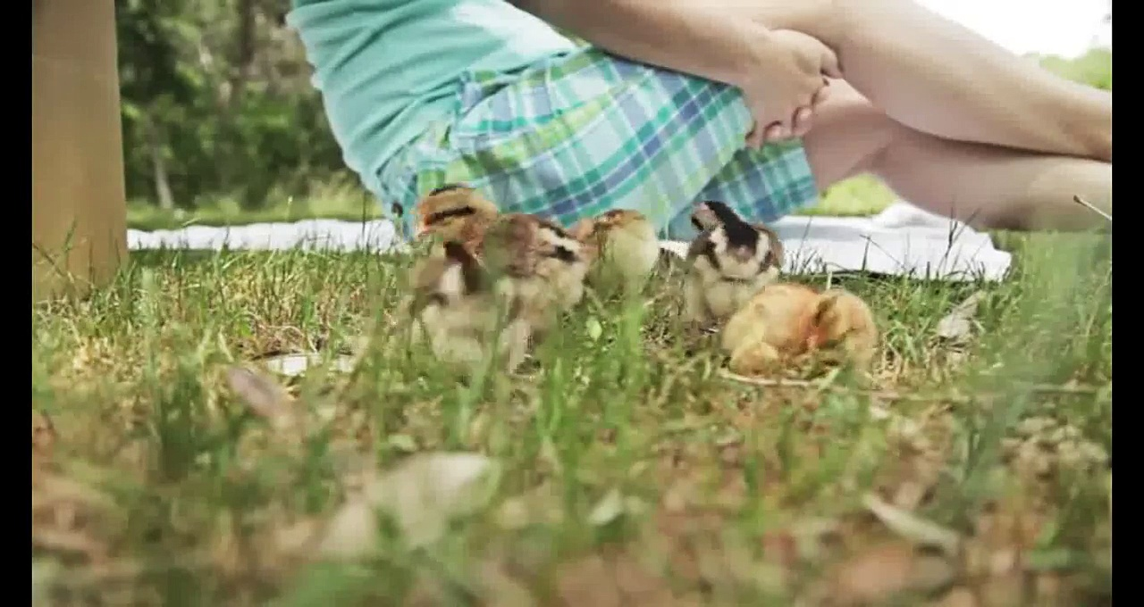 FUNNY CHICKEN VIDEOS | CUTE CHICKENS COMPILATION 2015 [NEW]