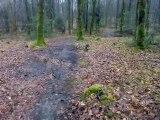 Féerie et Golmotte jouent dans la forêt