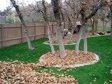 130# Un chien husky s'éclate dans un tas de feuilles