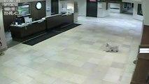 Cadela Foge De Casa E Percorre 5 Quilómetros Para Visitar Dona No Hospital
