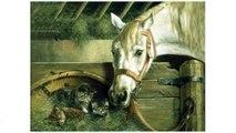 """Reeves Reeves, Набор для раскрашивания """"Лошадь и котенок"""""""
