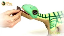 PLEO rb -  Learning stones and tricks