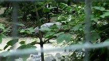 Birds in Opole Zoo Ptaki w Zoo Opole