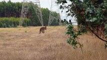 Le bebe kangourou de retour à la maison - 4
