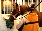 How to Care for Horses : How to Check a Horse's Health