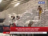 Authorities see delay in rice harvest due to lack of irrigation