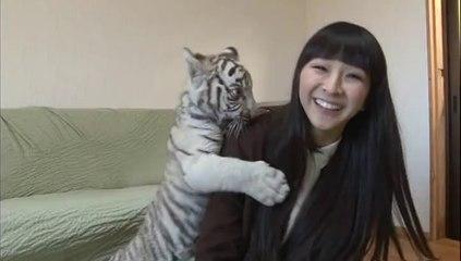 Kashiyuka playing with baby siberian tigers (Full Clip)