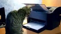 en komik videolar yavru kediler droll cats